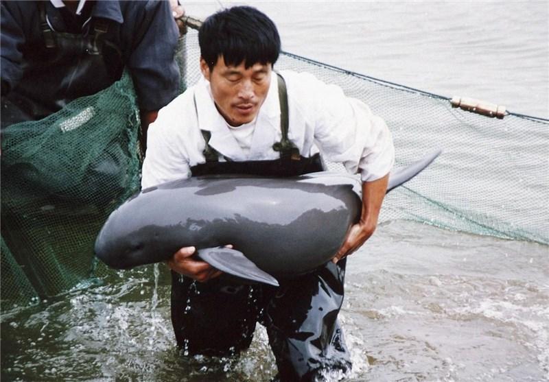 تشدید قوانین منع خوردن حیوانات وحشی در چین