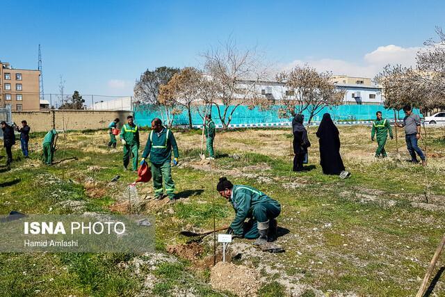 کاشت 560 هزار اصله درخت در شهر تهران، 530 نقطه با گل فرش می شود