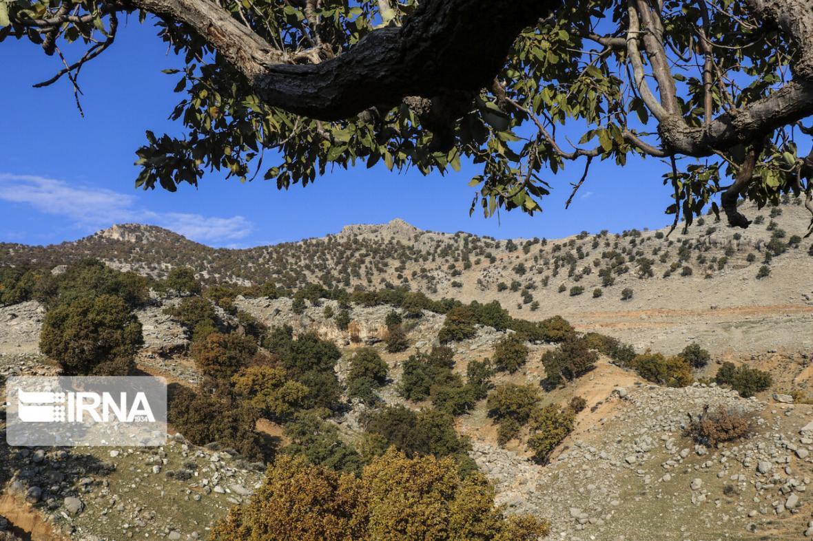 خبرنگاران 125 گروه مردمی و دولتی از منابع طبیعی جنوب کرمان حفاظت می کنند