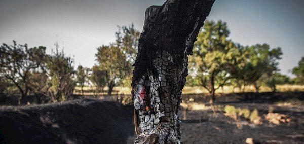 رخ دادن 68 بار آتش سوزی در باغستان سنتی قزوین
