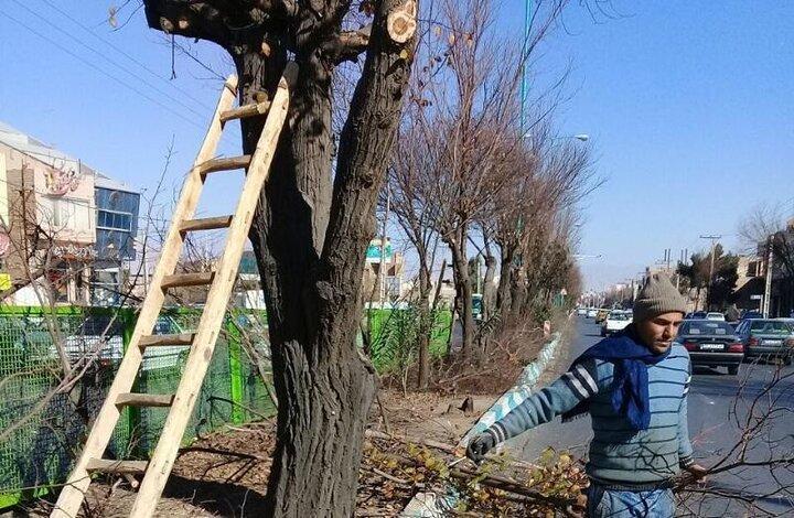 چوب و سرشاخه های درخت بازیافت می گردد