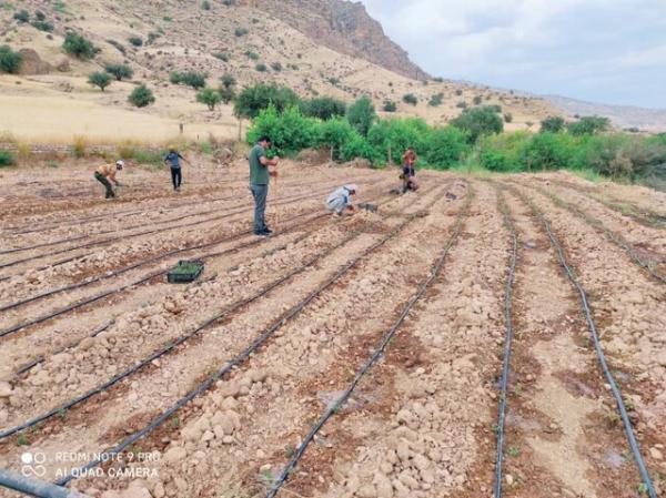 تخصیص 5 میلیارد اعتبار با هدف توسعه کشت گیاهان دارویی در شهرستان لنده