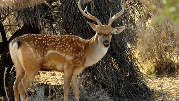 حیات وحش زیبای یزد